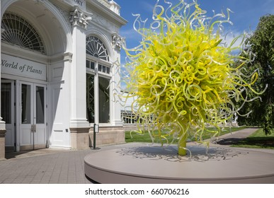BRONX, NY, USA - JUNE 9, 2017: NY BOTANICAL GARDEN.  Dale Chihuly's art exhibition at NYBG.  Shown here is Sol del Citron, one of the highlights, at the entrance of the Haupt Conservatory