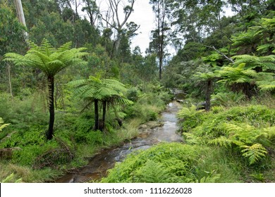 A brook in Blue Mountains in Australia