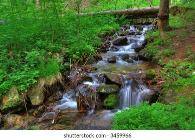 Brook in the forest of Bulgaria