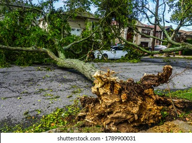 BROOKLYN, NEW YORK - AUGUST 4, 2020: Fallen trees damaged power lines, sidewalk and car in the aftermath of severe weather as tropical storm Isaias hits New York City