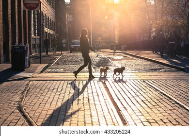 Brooklyn, New York City - April 17, 2016 : The woman take a walk with dogs at sunset on Brooklyn street, New York City, USA