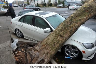 BROOKLYN, NY - OCTOBER 30: A fallen tree lies across a car n the Sheapsheadbay neighborhood due to flooding from Hurricane Sandy in Brooklyn, New York, U.S., on Tuesday, October 30, 2012.