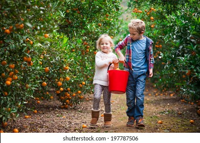 Brother and sister carrying a bucket full of mandarins on a mandarin farm after picking fruit