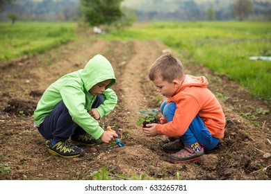 Brothers are plantings a seedling of strawberry. Home grown fruit and vegetables, biodynamic farming, organic horticulture concept photo.