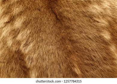 Brow fur texture with soft focus