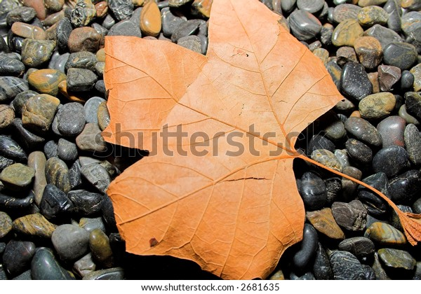 Brown aged and dry leaf on black pebbles. Macro Shot