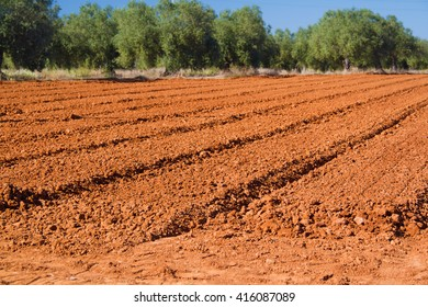 brown agriculture field in spring