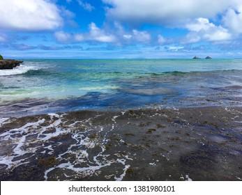 Brown Algae or seaweed blooms at Castles, the far end of Kailua Beach on Oahu, Hawaii.