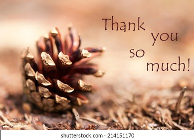 Brown Autumn Background with a Fir Cone and the Words Thank You so Much