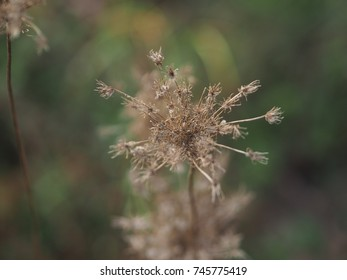 brown autumn flower