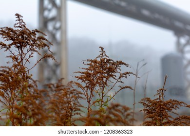 Brown autumn grass in misty urban landscape