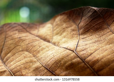 Brown Autumn leaf detail with green background