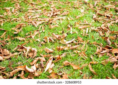 Brown autumn leaves lying on the green grass at the park.