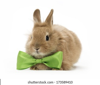 brown baby rabbit with a green bow on white background