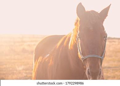 Brown Backlit Horse Wearing Halter