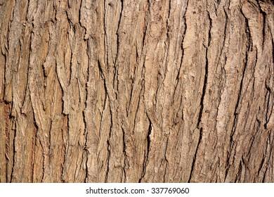 brown bark texture