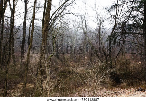 Brown barren trees and shrubs with lightly falling snow in winter.