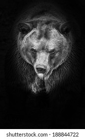 brown bear in black and white