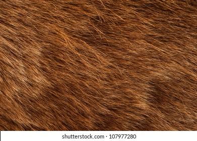Brown Bear Coat. Real Brown Bear Fur Closeup Photography.
