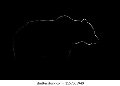 Brown bear contour in black and white. Bear body contour on black background.