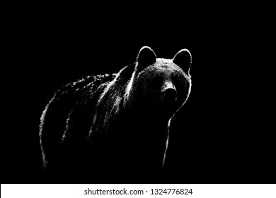 Brown bear contour on black background. Bear contour in black and white.
