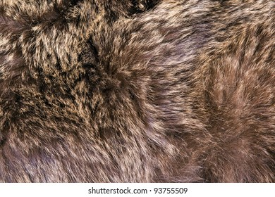 Brown bear hair