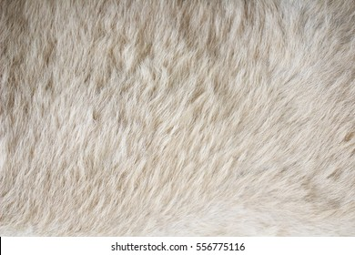 Brown bear hair texture background. Line wool floor with white light. Art sepia vintage backdrop. Seamless pattern.