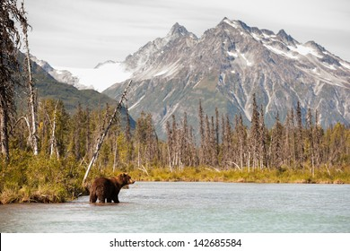 Brown Bear Hunting for Fish Against a Beautiful Alaskan Landscape