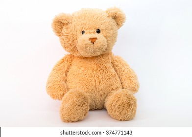 Brown bear isolated