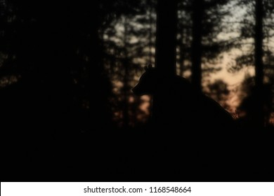 Brown bear at night in the forest. Bear in forest after sunset.