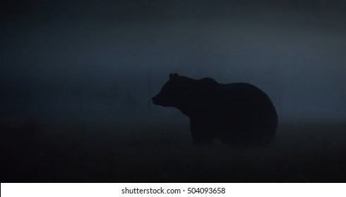 Brown bear at night in the mist