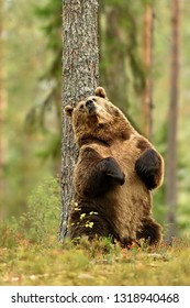 Brown bear sitting against a tree, save the forest
