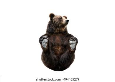 Advise you paddington bear sexual position