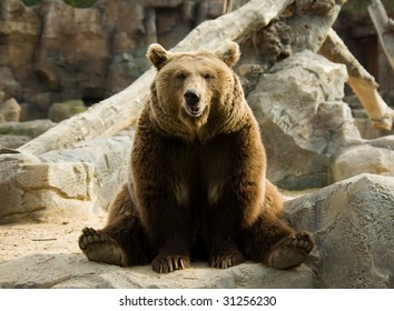 Brown bear sitting on a rock in a funny pose
