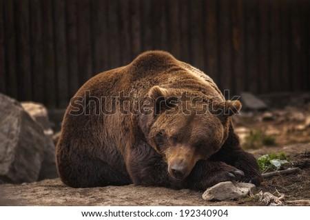 An evening with bear