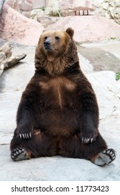 brown bear takes a rest