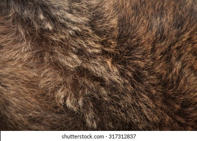 Brown bear (Ursus arctos) fur texture. Wild life animal.