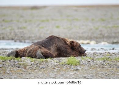 Brown bear waiting for salmon. Katmai, Alaska