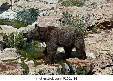brown bear is walking next to the water