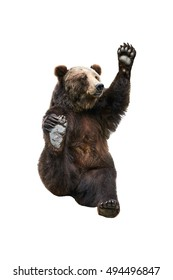 Brown bear waves his paw. Isolated white background.