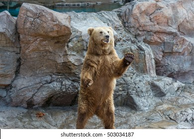 The brown bear welcomes, waves a paw.