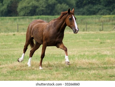 Brown beautiful horse