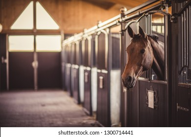 Brown beautiful horse standing in barn. Equestrian theme.