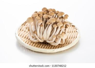 Brown beech mushroom