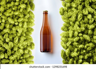 Brown beer bottlle template on white background  with two rows of hop cones.  There is a  translucent label on the glass. Top of view. Mockup ready for your showcase.
