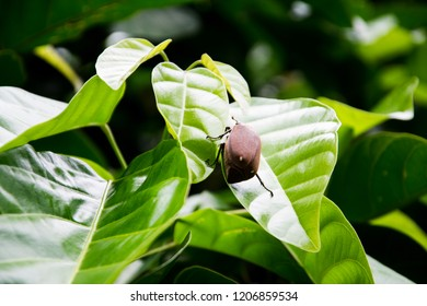 a brown beetle on the tree
