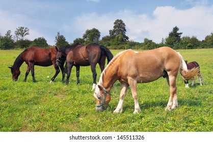 Brown and beige horses and colt grazing in a field.
