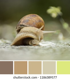 Brown beige land snail (Helix lucorum, Helix pomatia) terrestrial pulmonate gastropod mollusk with large spiral shell. Color palette swatches, natural combination of colors, inspired by nature