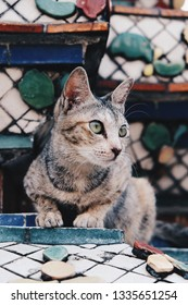 The brown black short hair fluffy cat looking around standing at pagoda in Wat Pho; the famous temple in Thailand