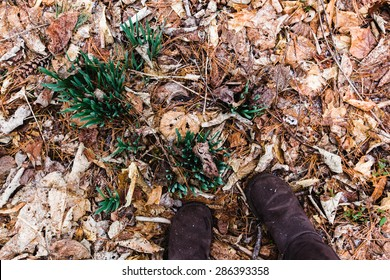 Brown boots stand next to spring bulbs on a snowy day in late winter.